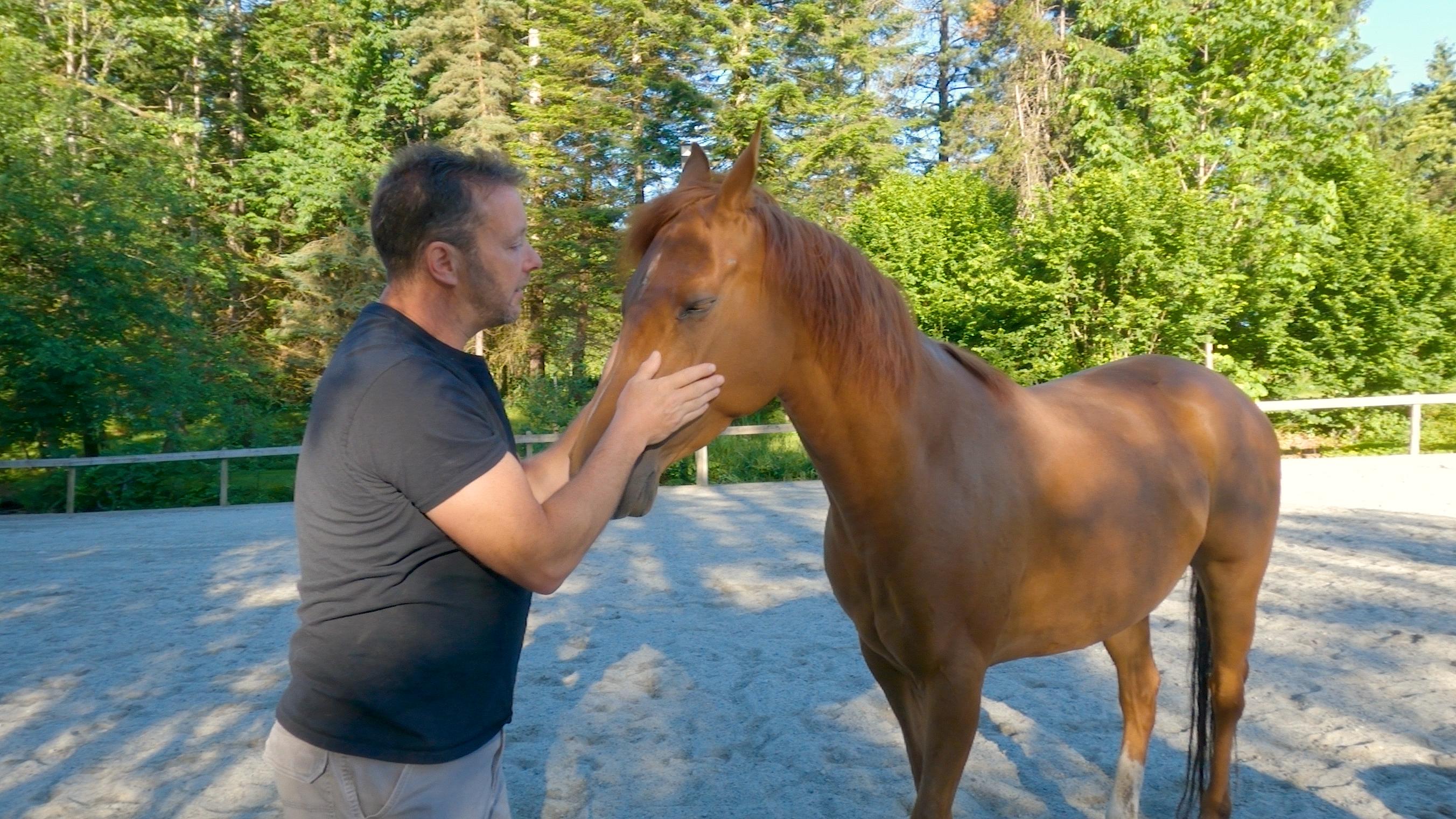 Stable Horse Training and Rehabilitation